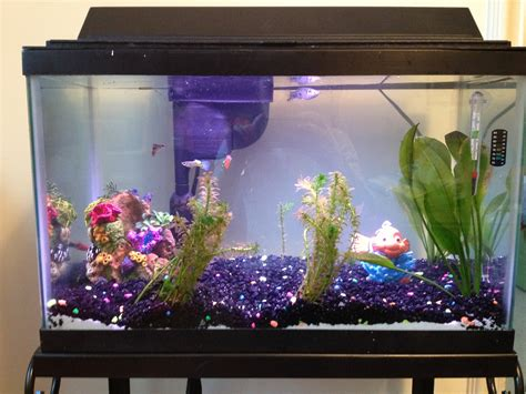fish tank for home aquaponic systems an innovative and