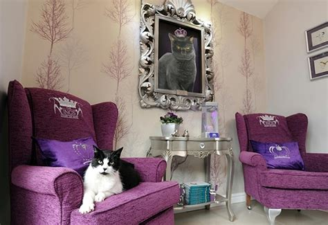 the ings luxury cat hotel opens up with one of the largest