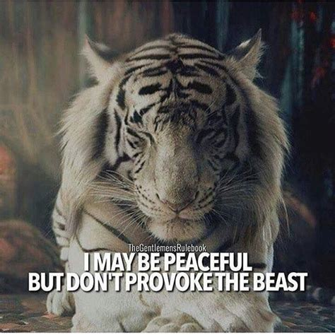tiger quotes 50 motivational whatsapp dp with quotes cult of digital
