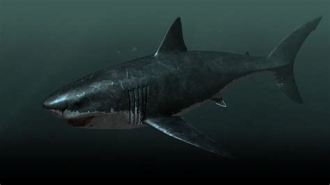 imagenes reales megalodon megalodon is it possible that this nearly 67 foot shark
