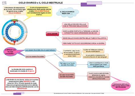 ciclo mestruale e alimentazione il ciclo mestruale