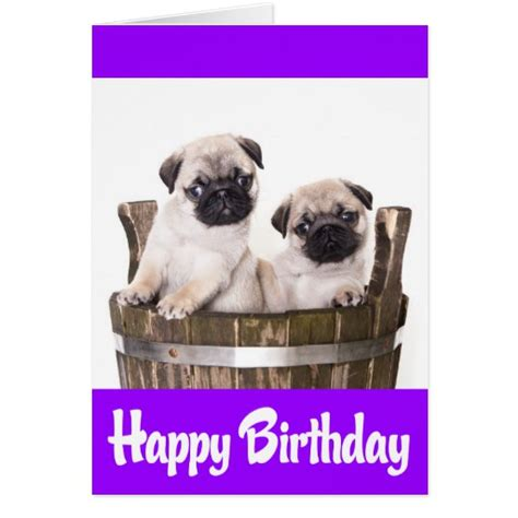 pug puppy birthday happy puppy meme memes