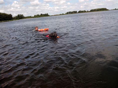 zwemvest hond verplicht zwemvest voor de hond hondenforum