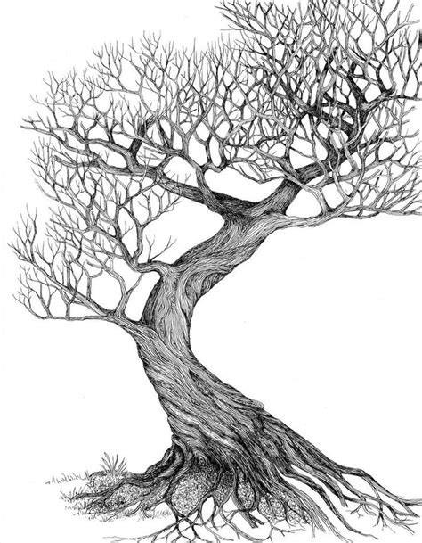 line drawings trees 25 best ideas about tree drawings on trees