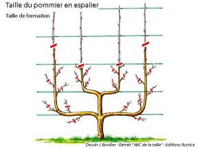 Incroyable Taille D Arbres Fruitiers #2: Taille-pommier-espalier-for-l720-h512.jpg