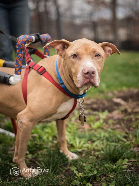 shelters in va loving rescue pet of the week va photography