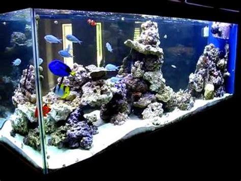 design zeeaquarium 20 best images about zee aquarium on pinterest plugs