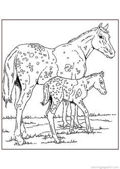 connemara pony coloring pages 1000 ideas about coloring page on pinterest disney