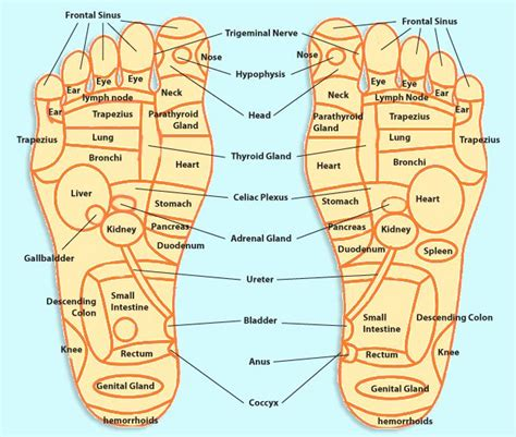 acupressure diagram of pressure points 25 best ideas about foot pressure points on