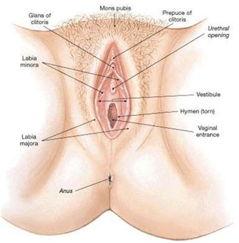 How deep is the vaginal canal