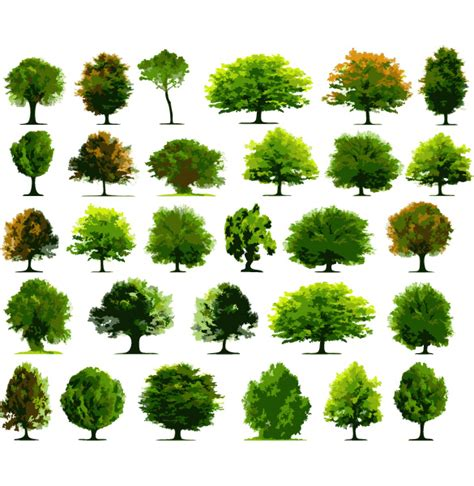 trees types 30 varieties of vector tree illustrations