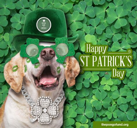 St Patrick S Meme - happy st patrick s day the pongo fund