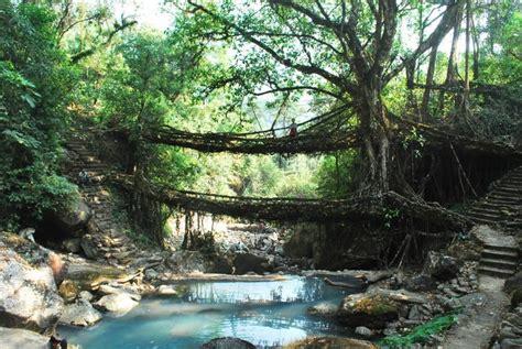 living bridges explore the root bridges of cherrapunji in meghalaya cox
