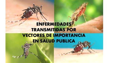 imagenes de vectores transmisores de enfermedades enfermedades trasmitidas por vectores
