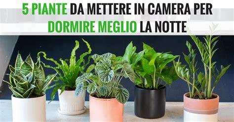 piante da letto piante purificano l in da letto