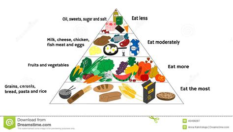 food diagram food diagram stock vector illustration of diagram