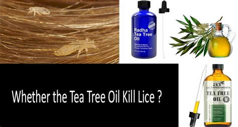tea tree oil for bed bugs tea tree oil bed bugs 28 images pest control services