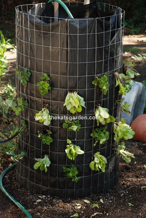 how to grow a vertical garden how to make a vertical lettuce garden