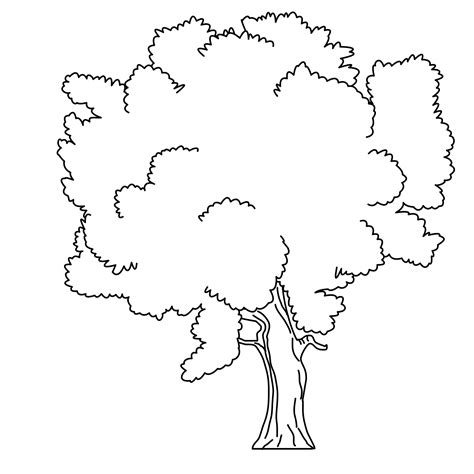 Simple Tree Without Leaves Coloring Pages Simple Tree Coloring Pages