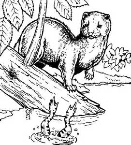 minks colouring pages sketch template