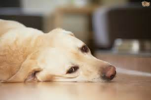 subtle symptoms of ill health in dogs pets4homes