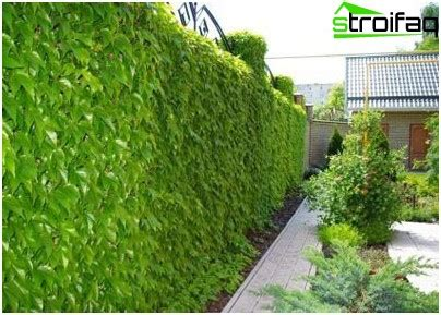 which plants are suitable for vertical gardening