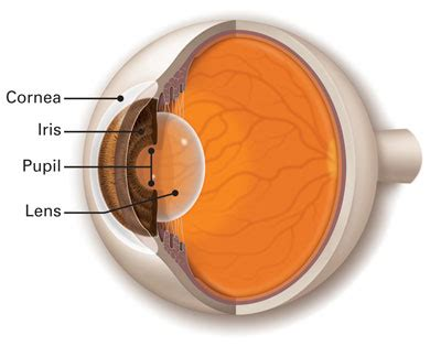 eye lens lens american academy of ophthalmology