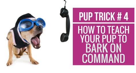 how to to bark on command pup trick 4 teach your pup to bark on command pupcorner