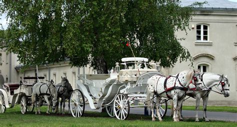 horse and chaise horse and chaise horse cart izvozchik coachman on