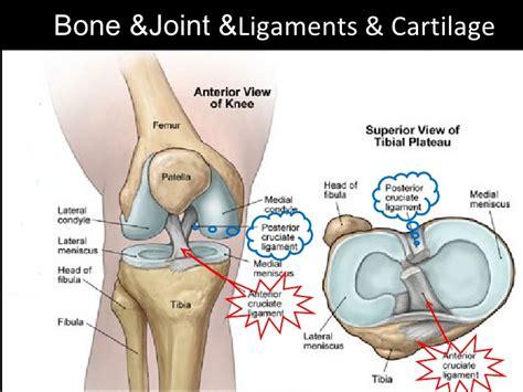 anterior cruciate ligament acl anterior cruciate ligament injury