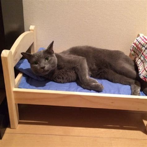 donate ikea furniture ikea donates doll beds to cat shelter cats can t get enough of them blazepress