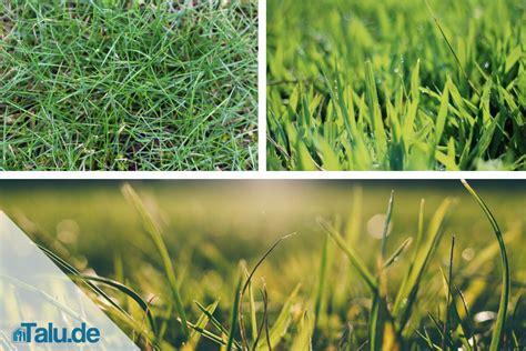 Rasen Kalken Zeitpunkt Rasen Kalken Zeitpunkt Rasenpflege