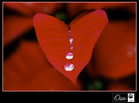 imagenes corazon llorando corazon llorando by photosito on deviantart