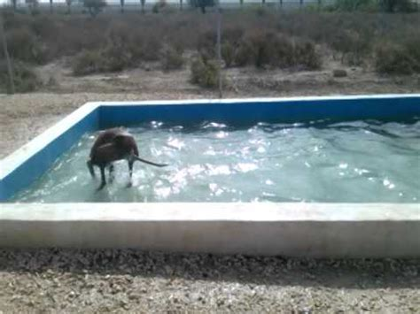 Backyard Pools For Dogs Enthusiastic Cools In Backyard Pool