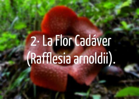 imagenes de flores del co abonos ecol 243 gicos y fertilizantes ecologicos agrobeta blog