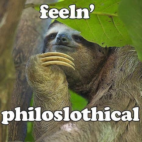 Pervy Sloth Meme - 75 best inappropriately hilarious sloth images on pinterest