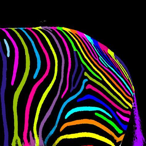 colorful zebra colorful zebra by juuustgpb on deviantart
