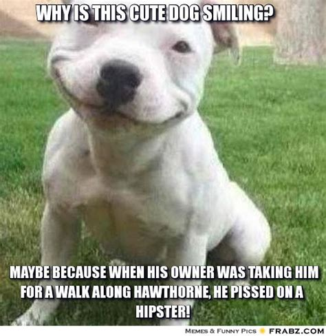 Cute Dog Memes - why is this cute dog smiling meme generator captionator