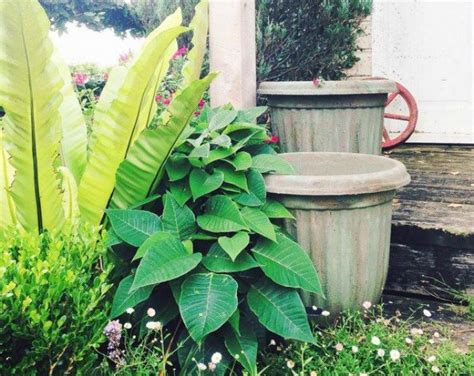 inexpensive garden containers hometalk how to upcycle cheap flower pots