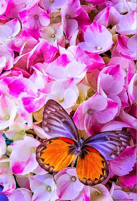 imagenes de rosas y mariposas bellas cuadros modernos pinturas y dibujos mariposas y flores