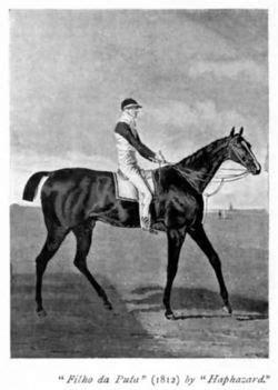 Filho da Puta (cavalo) - Desciclopédia