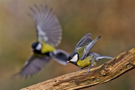 beautiful pictures of birds ready to take off or fly