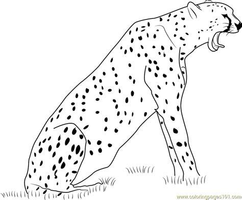 coloring page of cheetah cheetah howling coloring page free cheetah coloring