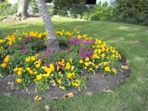 pansy garden ideas color garden blunder pansy and snap disaster avi