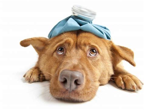 sick puppy symptoms illnesses symptoms common signs of a sick