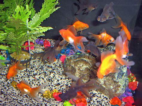Poisson Exotique Pour Aquarium by Poissons Exotiques Poissons D Eau Froide Site De