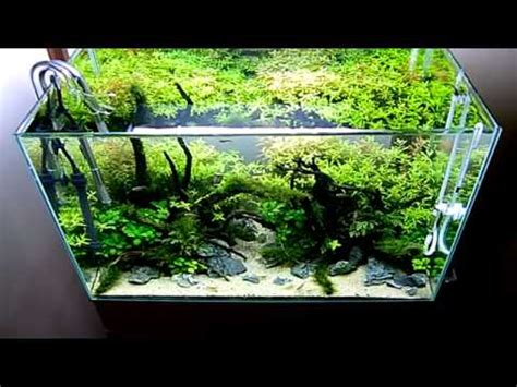 Lu Aquarium Ikan Hias jasa perawatan aquarium dan kolam ikan koi