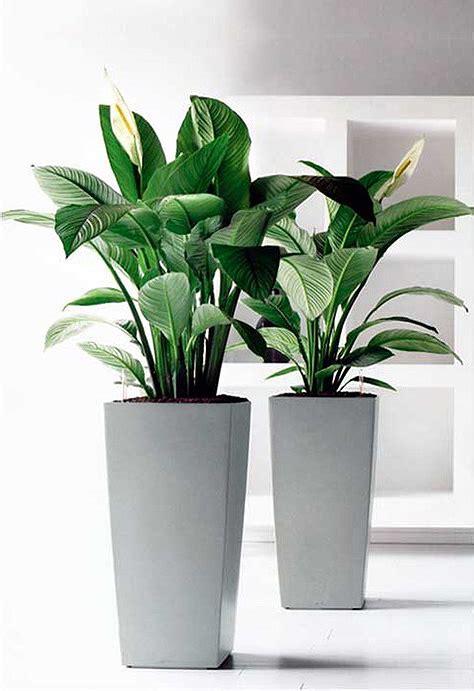 plants broadway plantscapers