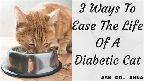 ways  ease  life   diabetic cat  dr anna
