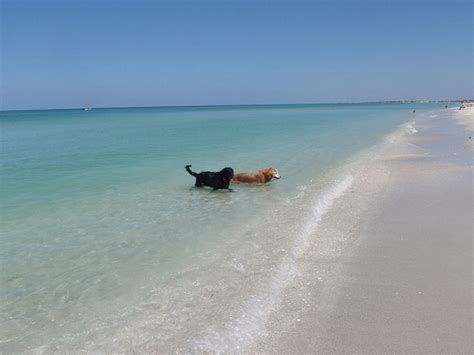 friendly beaches island boca grande gasparilla island cat other pet friendly in ft myers